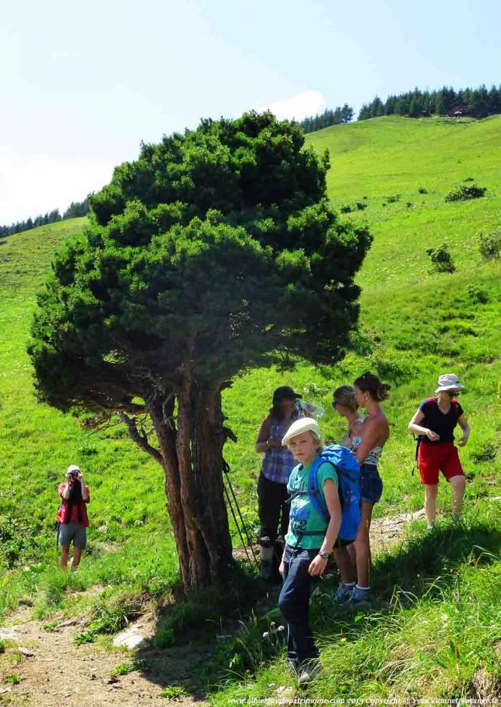 Rando journée, Cime de Lancheton 2417 m, un Pin solitaire