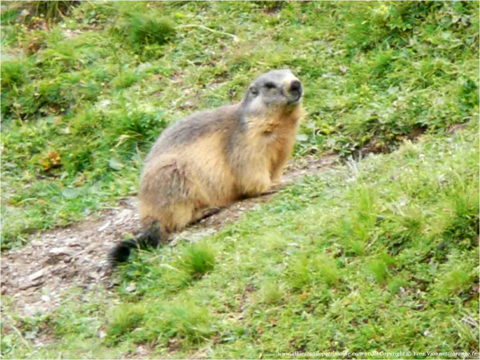 P1100967 080821 marmottesparcecrins