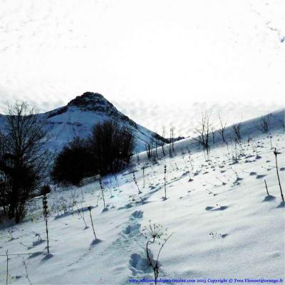 Ven. Traces et indices de vie de la faune de montagne