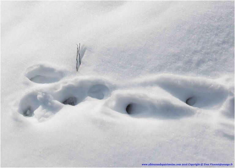 18) Traces et indices de vie de la faune