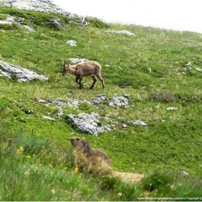 Mar. Randonnée dans le Parc National de la Vanoise