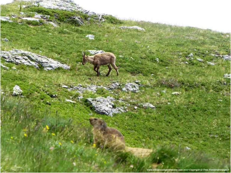 3) Randonnée dans le Parc National de la Vanoise