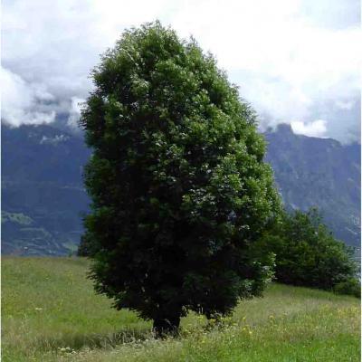Mer. Plein d'énergie avec un arbre