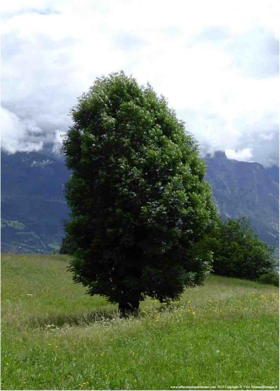 6) Plein d'énergie avec un arbre