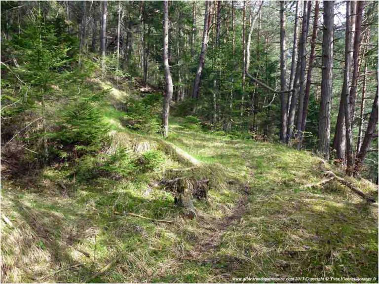 2) Bain de forêt, secret de santé naturelle & Qi gong