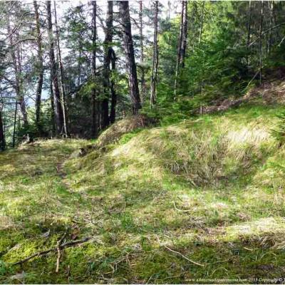 Lun. Bain de forêt, secret de santé naturelle & Qi gong