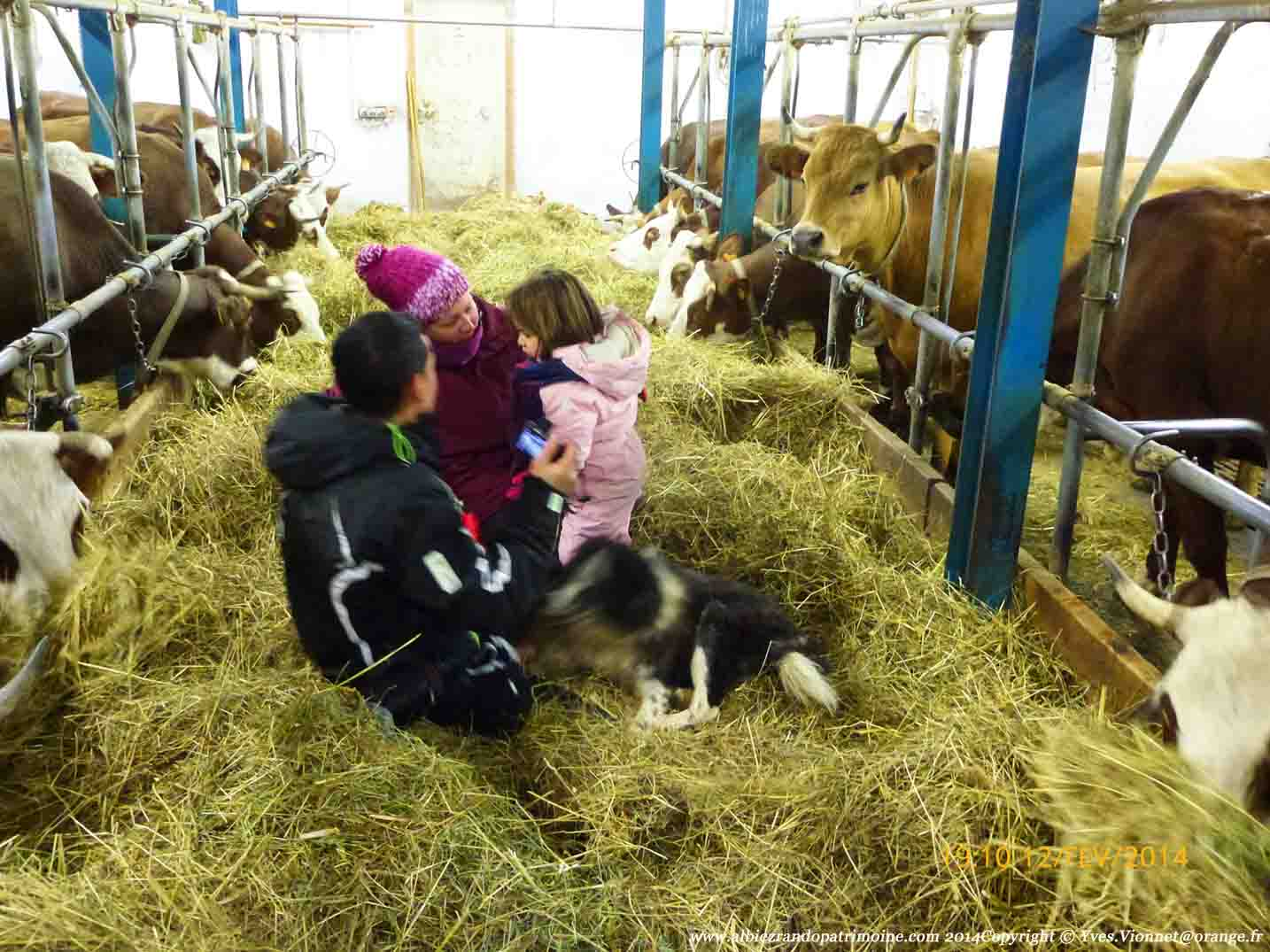 Petite balade gourmande, visite de la traite des vaches