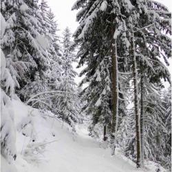 """""""Rando raquettes en forêt"""", dans le silence une randonnée magnifique."""