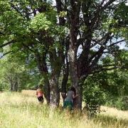 P1120221 200729 plein energie arbre
