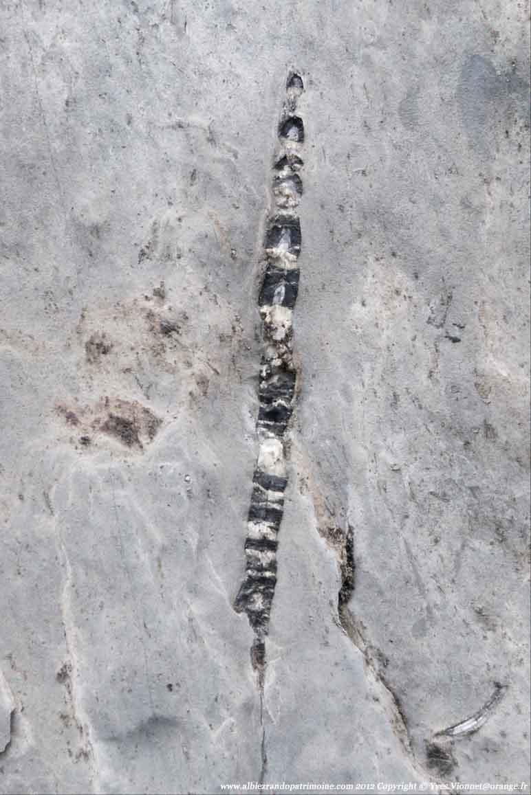 La chasse aux fossiles, chercher et trouver,